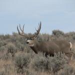 08-hunts-003-219-score-buck