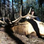 Rifle elk hunting in New Mexicos Gila 16A