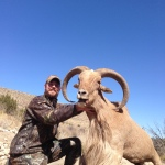 monster New Mexico Aoudad sheep