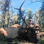 nice unit 36 bull