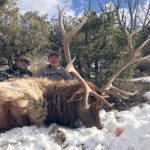 late-season-elk