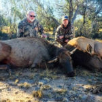 guide-cow-elk-hunting