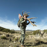 new-mexico-elk