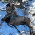 cow-elk-hunting
