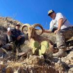 trophy-aoudad-sheep-hunting-texas