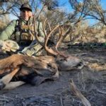 New Mexico bow hunting mule deer