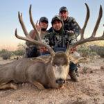 Sonora-mule-deer
