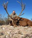 free rangered stag in Texas