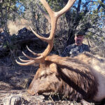 unit-30-elk-hunting-new-mexico